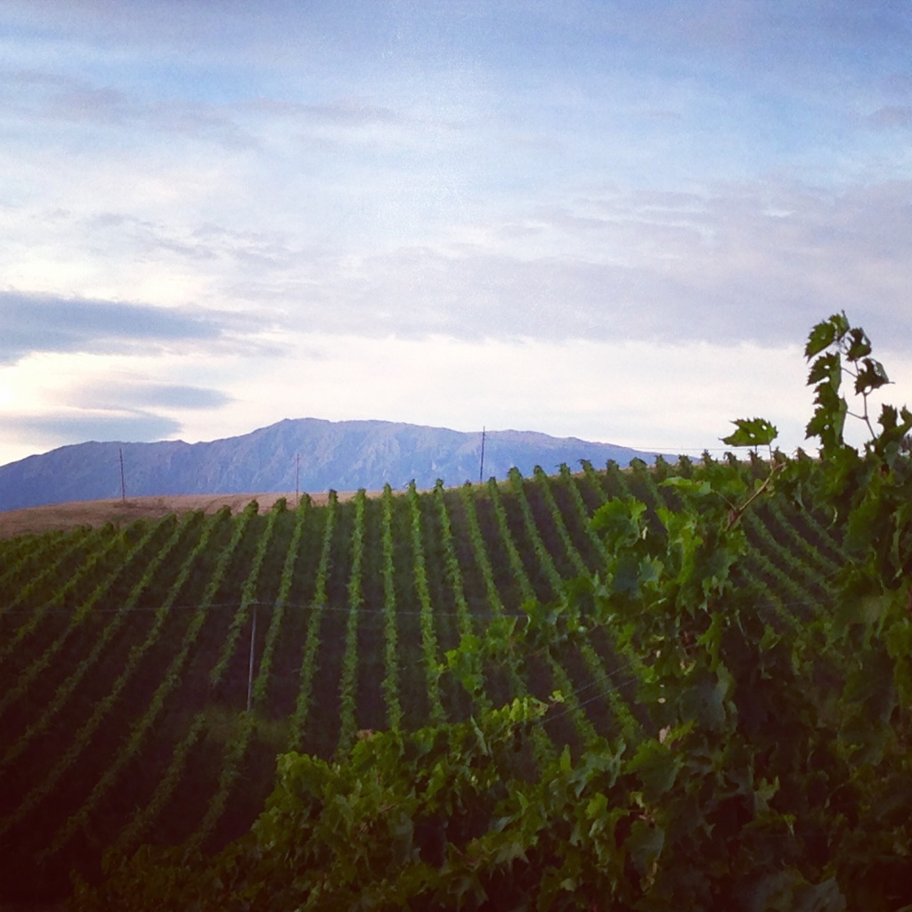 Tiberio Pecorino vineyard