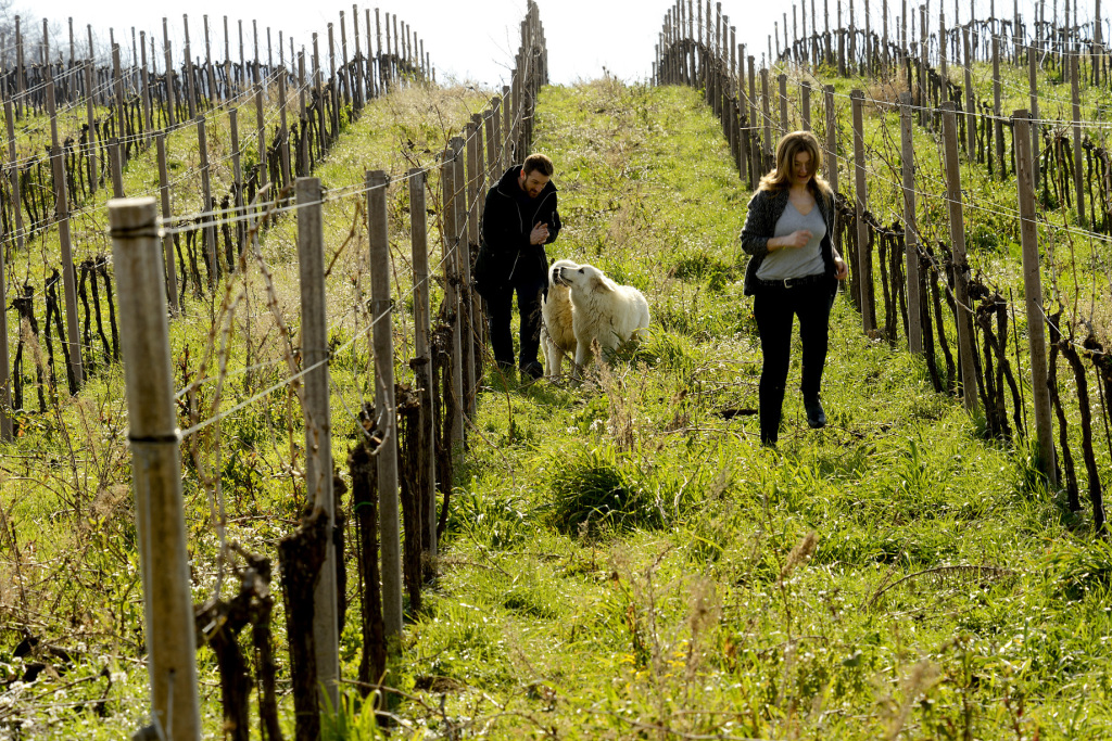 Antonio and Cristiana Tiberio with Tione and Onna in Montepulciano vineyard