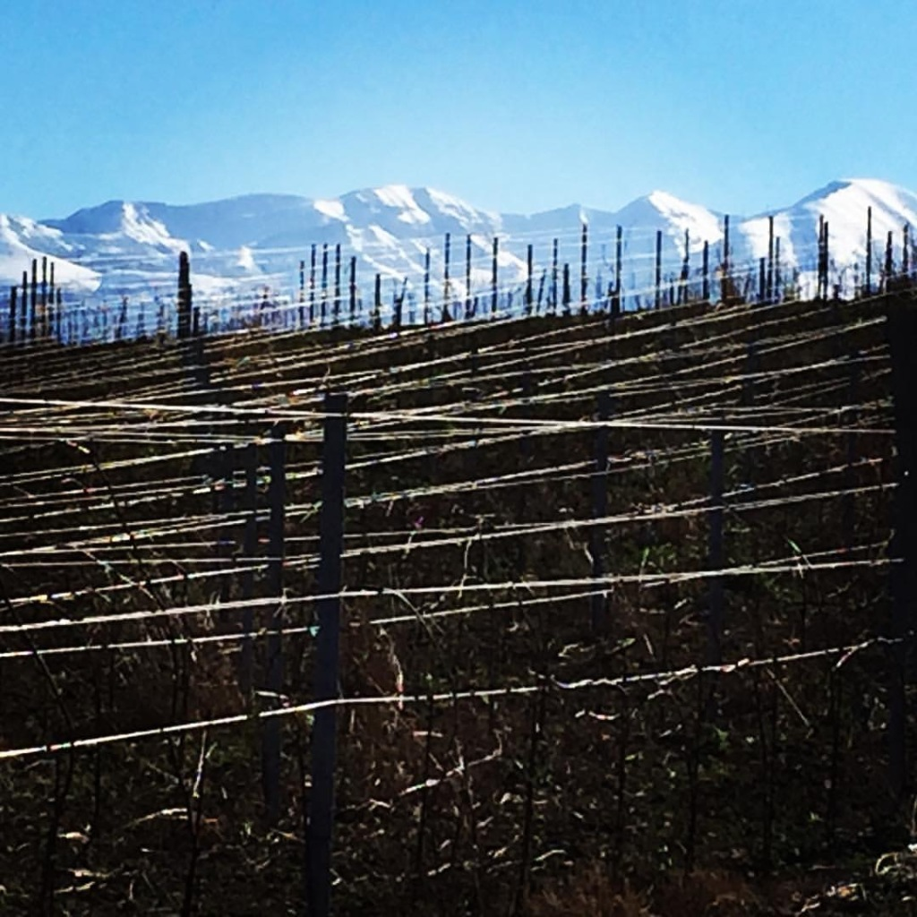 Pecorino Vineyard in winter time