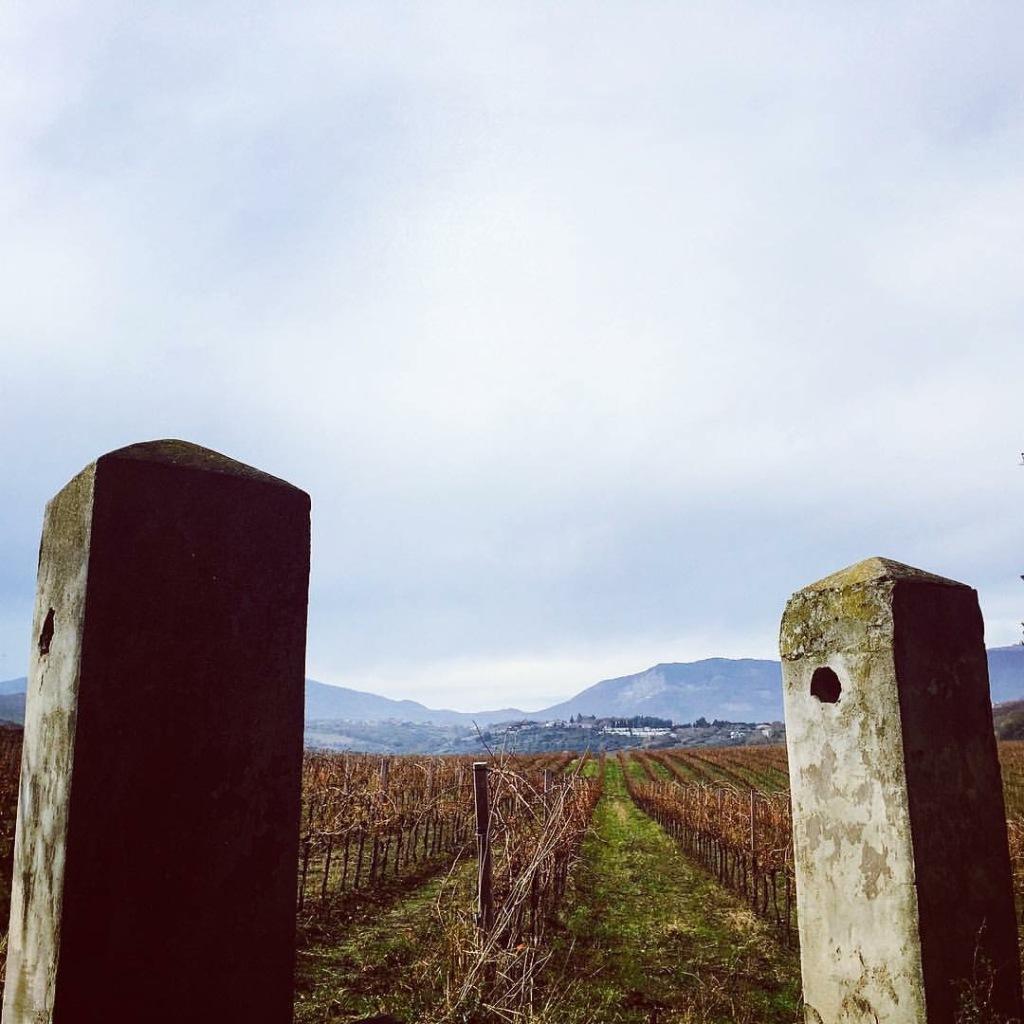 vigne con forca di penne