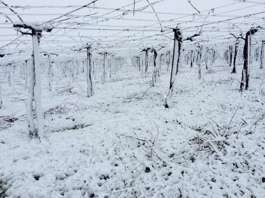 Pergola di Montepulciano in inverno